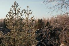 Marmorschlucht im Winter Stockfotografie