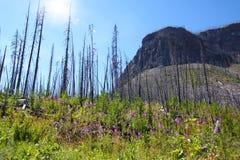 Marmorschlucht in Nationalpark Kootenay nahe Banff, Kanada lizenzfreie stockfotos