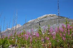 Marmorschlucht in Nationalpark Kootenay nahe Banff, Kanada stockbild