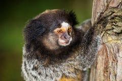 Little monkey in the tree stock image