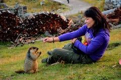 marmot Fotos de archivo