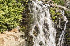 Marmot Falls Royalty Free Stock Photos