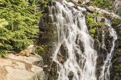 Marmot Falls Royalty Free Stock Photos
