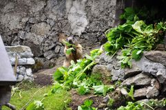 Marmot house. S where the little animals live Stock Photography