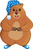 Marmot in the nightcap. Stock Photos
