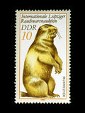Marmot on Stamp from East Germany Stock Photo