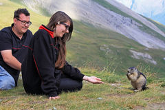 The Marmot. Two young people feed a Marmot Royalty Free Stock Photography