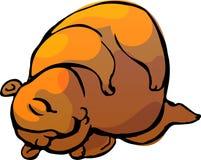 Marmot. Vector illustration. Sketch of a marmot as a vector illustration Stock Photos