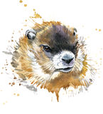 Marmot watercolor. Royalty Free Stock Image