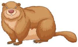 marmota stock de ilustración