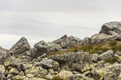Marmota en los cantos rodados Foto de archivo