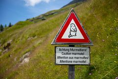 marmots Стоковые Фото