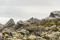 Marmotta sui massi Fotografia Stock