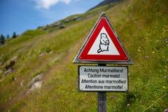 Marmotte Fotografie Stock
