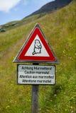 Marmotte Immagini Stock Libere da Diritti