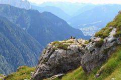 Marmotte e valle di Fassa Fotografia Stock