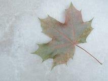 Marmurowa tekstura z liściem klonowym Zdjęcia Stock