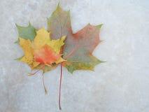 Marmurowa tekstura z liściem klonowym Obraz Royalty Free