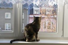 Marmurowy kota obsiadanie na przyglądającym outside i windowsill zdjęcie royalty free