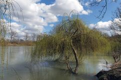 Marne river in Ile de France. Marne river and weeping willow in ile de France country Stock Image
