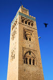 In maroc africa minaret and the bird Stock Image