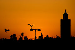 Maroc Marrakech sunset view with a stork flying Stock Image
