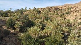 Marocain de Sáhara del au del oasis de la belleza del une del oasis de la palmera fotografía de archivo