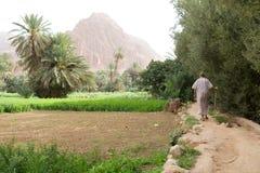 Marocko oas arkivfoto