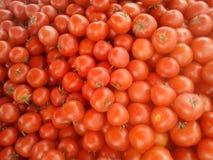 Maroco del tomate fotografía de archivo