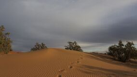 Marokańskie pustynie zbiory