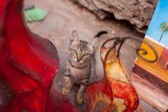 Marokański kot Fotografia Royalty Free