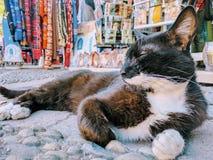 Marokański uliczny kot Zdjęcie Royalty Free