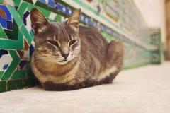 Marokański uliczny kot Obrazy Stock