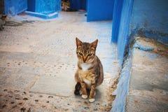 Marokański uliczny kot Fotografia Royalty Free
