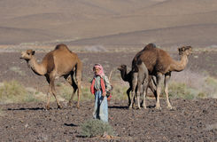 Marokkaans Kind met Kamelen Stock Foto