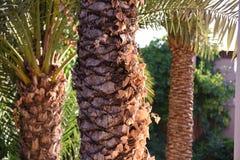 Marokkaanse tuin stock foto 39 s 135 marokkaanse tuin stock afbeeldingen stock fotografie - Tuin marokkaans terras ...