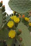 Marokkanische Landschaft Wüste Lizenzfreies Stockfoto