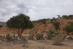 Marokkanische Landschaft Wüste Lizenzfreie Stockfotos