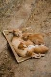 Marokkanische Mutterkatze, die mit vier Kätzchen in einem Bilderrahmen in den Straßen von Tetouan, Marokko schläft Stockbilder