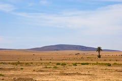 Marokkanische Wüste Stockfoto
