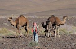Marokkanisches Kind mit Kamelen stockfoto