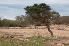Marokkanisches Land mit Arganbaum Stockbilder