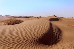 Marokko, Dünen mit Busch Lizenzfreie Stockfotos