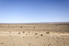 Marokko-, Draa-Tal, Dromedare, Schafe und Ziegen Stockfoto