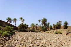 Marokko, Draa-Tal, Oase Lizenzfreie Stockfotografie