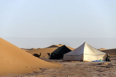 Marokko-, Draa-Tal, Zelte und Dromedare Stockfotos