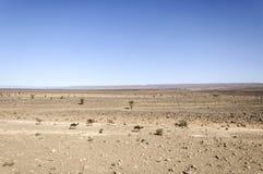 Marokko, Draa-vallei, dromedarissen, sheeps en geiten Stock Foto