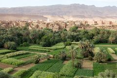 Marokko-landwirtschaftliche Landschaft Stockbilder