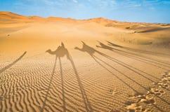 Marokko, Merzouga: schaduwen van een kameelcaravan stock foto's