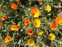 Marokko-Natur Lizenzfreies Stockbild